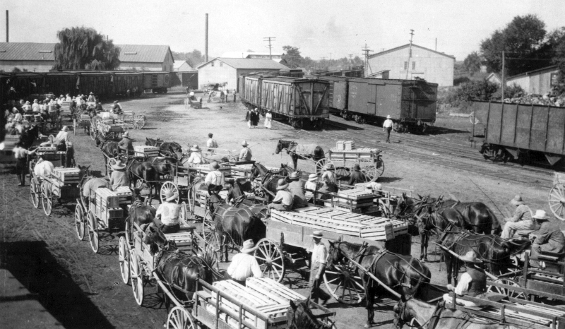 A loading yard in Seaford, Delaware (1917) showing people with loads of peaches, cantaloupes, and watermelon.