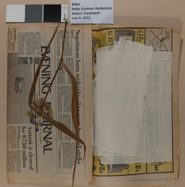 Peter Lindtner's herbarium before treatment