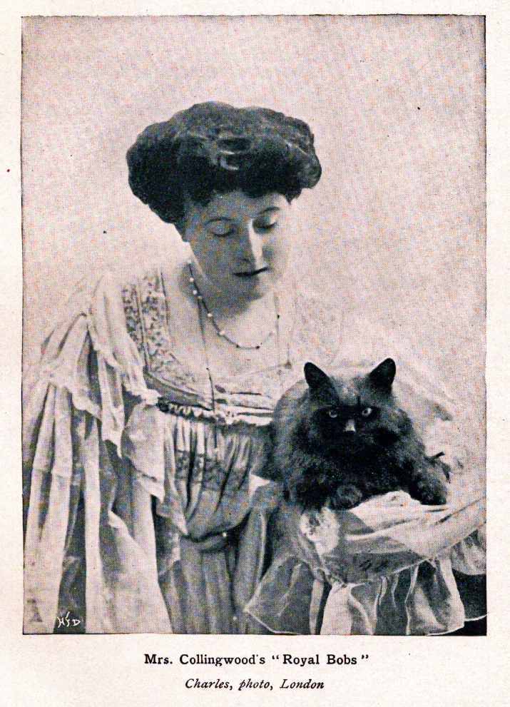 A dark haired cat is held by his owner, a brunette woman in a fancy ruffled dress.