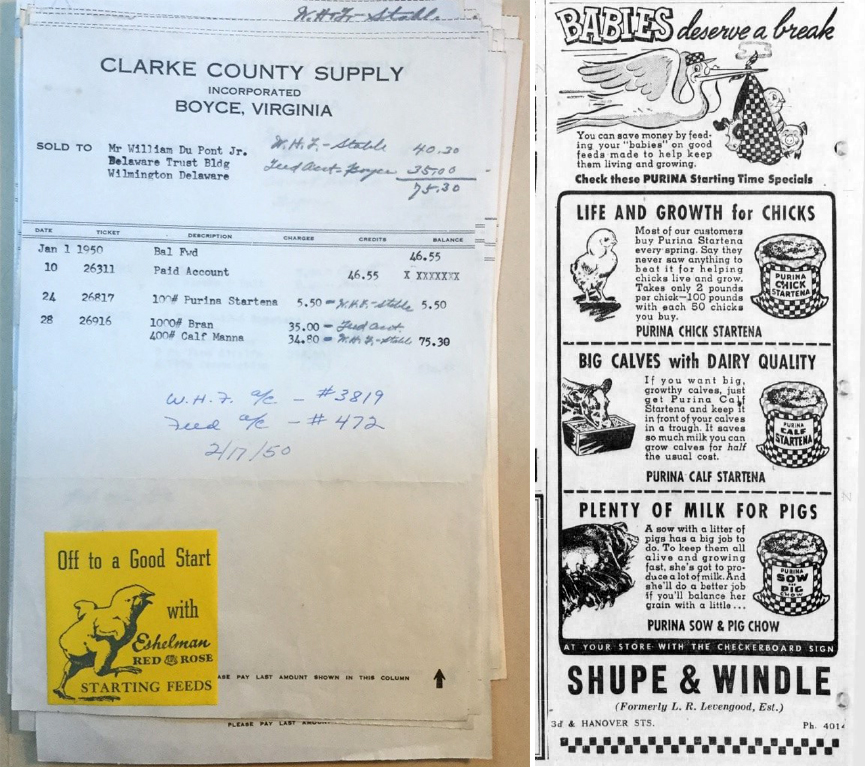 Clarke County Supply feed slip from the William du Pont, Jr. Papers. An advertisement for Purina's Startena from a Pottstown, Pennsylvania newspaper, dated 1950.