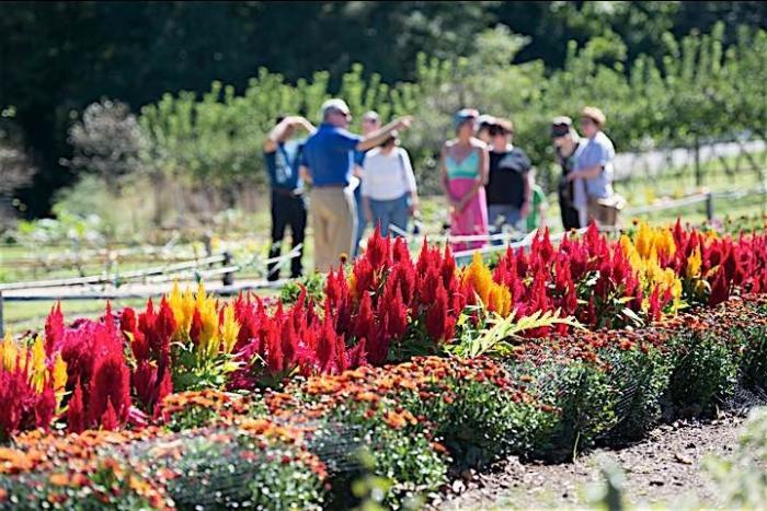 A guide brings a group through the E. I. du Pont garden.
