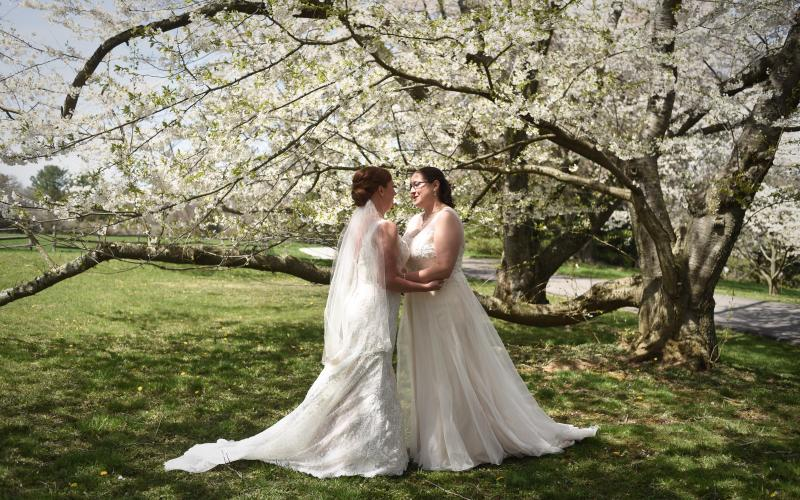 brides beneath tree