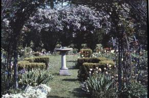 Autochrome transparency showing a trellised garden with candytuft, tulips and ionicera.