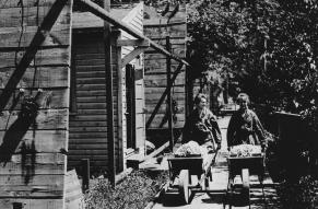 Black and white photograph of two women transporting material in wheelbarrows along a wooden walkway next to buildings.